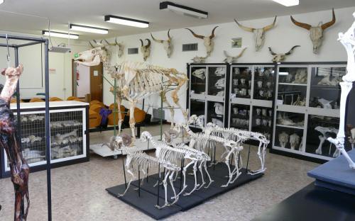 Aula museale anatomica